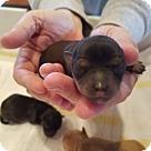 Adopt A Pet :: Princess Elena of Avalor