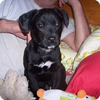 Adopt A Pet :: Murphy - Fultonham, NY
