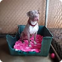 Adopt A Pet :: Mr Nice - Manchester, NH