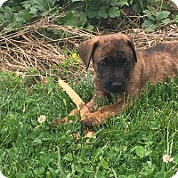 Adopt A Pet :: Jetson - Russellville, KY