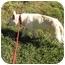 Photo 4 - German Shepherd Dog Dog for adoption in Conyers, Georgia - Lisbeth