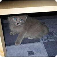 Adopt A Pet :: Tully - Davis, CA