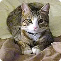 Adopt A Pet :: Doof - Laguna Woods, CA