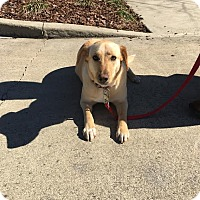 Adopt A Pet :: PheeBee - Gadsden, AL