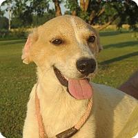 Adopt A Pet :: Evan - Westport, CT