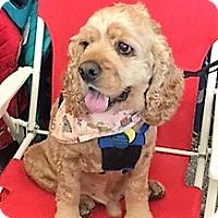 Adopt A Pet :: Robbie--ADOPTED!! - Sacramento, CA