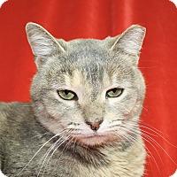 Adopt A Pet :: Tami - Jackson, MI