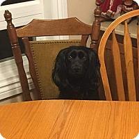 Adopt A Pet :: JoJo - Edmonton, AB