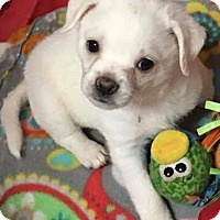 Adopt A Pet :: Winston - Spring, TX