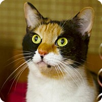 Adopt A Pet :: Cheeks - White Bluff, TN