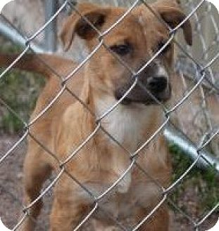 Shepherd (Unknown Type) Mix Puppy for adoption in Tucson, Arizona - JoJo