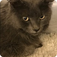 Adopt A Pet :: Bitsy - Sherman Oaks, CA