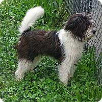 Adopt A Pet :: Jace - Halifax, NC