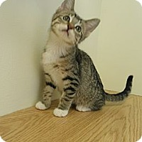 Adopt A Pet :: Coconut Cream - IN FOSTER CARE - Milwaukee, WI