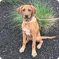 Adopt A Pet :: Willow - Bridgewater, NJ