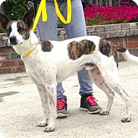 Adopt A Pet :: Buddy - Lathrop, CA
