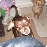 Adopt A Pet :: TITO - SCOTTSDALE, AZ