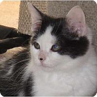 Adopt A Pet :: Poppett - Port Republic, MD