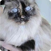 Adopt A Pet :: Lady Tuscany - Columbus, OH