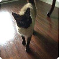 Adopt A Pet :: Maxwell - Mobile, AL