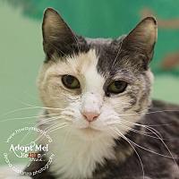 Adopt A Pet :: Myrna - Lyons, NY