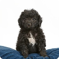 Adopt A Pet :: Wanda - Nuevo, CA