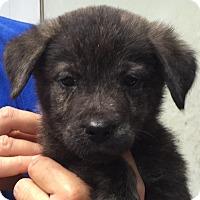 Adopt A Pet :: Willis#1M - Orlando, FL