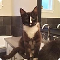 Adopt A Pet :: Michelle - Vancouver, BC