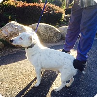 Adopt A Pet :: Mason - Wisconsin Dells, WI