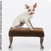 Adopt A Pet :: Darlene - Dallas, TX