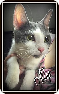 Domestic Shorthair Cat for adoption in Salem, Ohio - Ally
