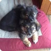 Adopt A Pet :: Milo and Nico - Marlton, NJ