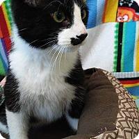 Adopt A Pet :: Pepe - South Haven, MI