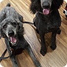 Adopt A Pet :: Carley and Max