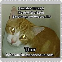 Adopt A Pet :: THor - Cumbeland, MD
