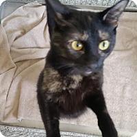 Adopt A Pet :: Raven - Huntley, IL