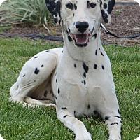 Adopt A Pet :: Dottie - Corona, CA