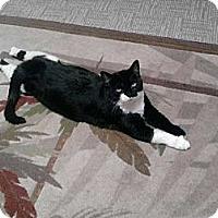 Adopt A Pet :: Billie and Toby - Laguna Woods, CA