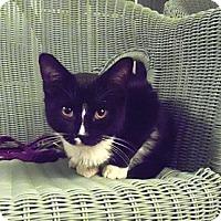 Adopt A Pet :: Springer - Catasauqua, PA