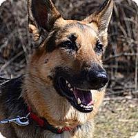 Adopt A Pet :: Brutus - Indianapolis, IN