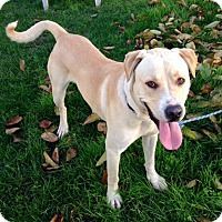 Adopt A Pet :: Leo - Long Beach, CA