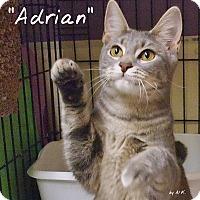 Adopt A Pet :: Adrian - Ocean City, NJ