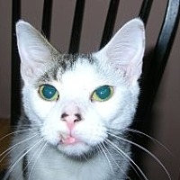 Adopt A Pet :: Dakota - Boca Raton, FL