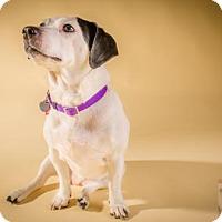 Adopt A Pet :: Jaylo - Livonia, MI