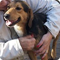 Adopt A Pet :: Nick - Little River, SC