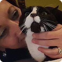 Adopt A Pet :: Eva - Raritan, NJ