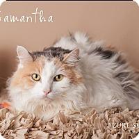 Adopt A Pet :: Samantha - Gilbert, AZ