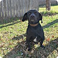 Adopt A Pet :: DON JUAN - Lubbock, TX