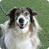 Adopt A Pet :: Sable - Odessa, FL