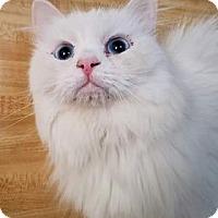 Adopt A Pet :: Hassoon - Ennis, TX